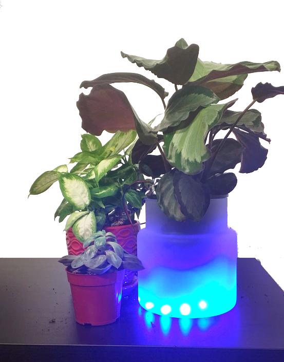 BrightPot